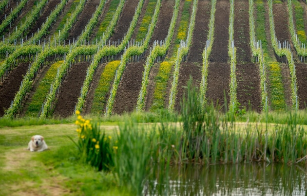 This is a picture of Bluebell Vineyard in East Sussex