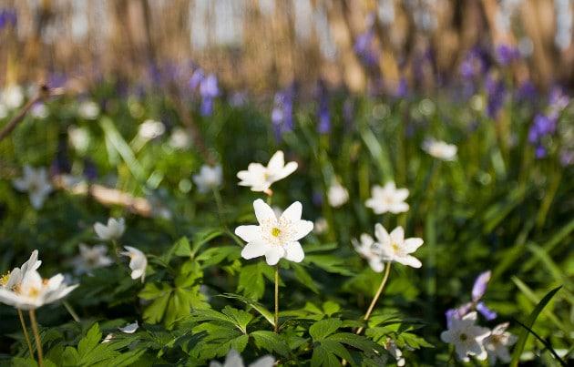 High Weald flowers  630x403